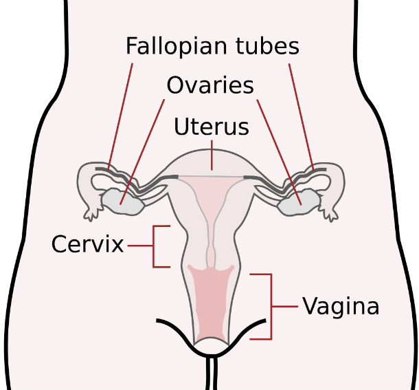 The Extremely Narrow Human Birth Canal