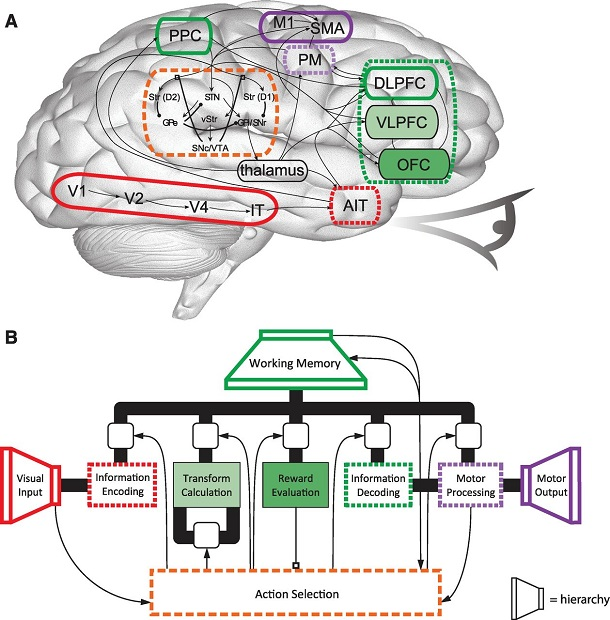brain with information processing sectors