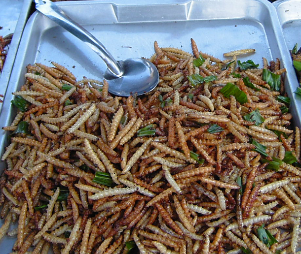 Bamboo_worms_on_plate