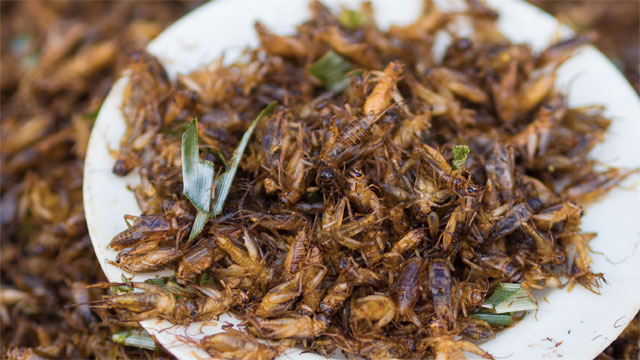 Chocolate Covered Crickets (Thailand)