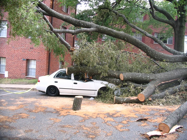 Barcroft_4200_Columbia_Pike_Car_Damaged_by_Tree