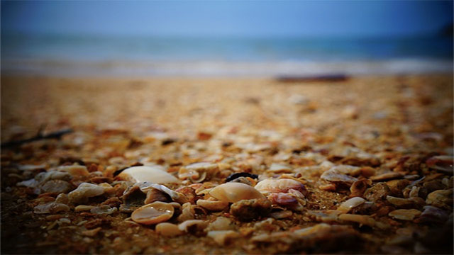 Seashells used to be a fairly common form of currency in many parts of the world