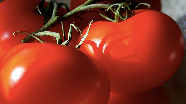 The tomato is the world's most popular fruit