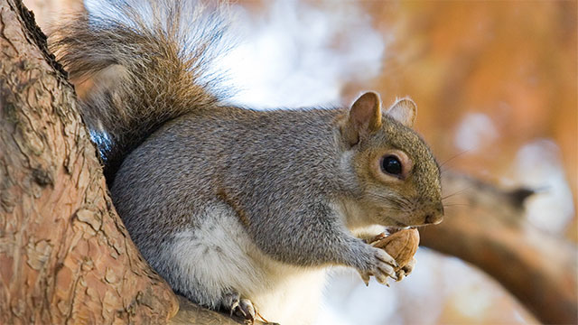 In 2007, Iran arrested 14 squirrels for spying
