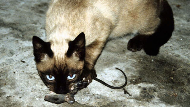 """When cats bring dead animals back to their humans, they are """"teaching them to hunt"""" as they would with a younger cat"""