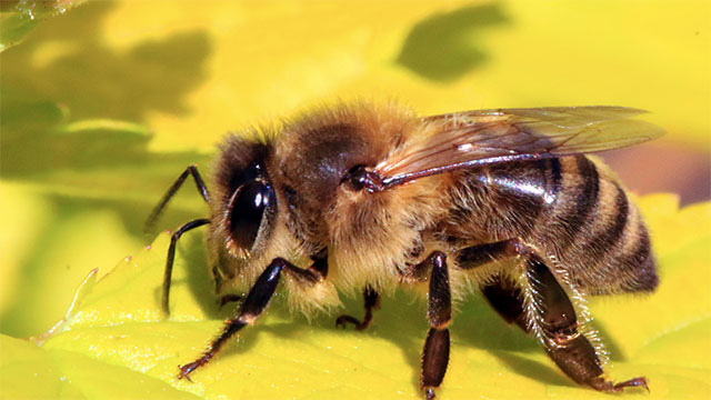 Nanoparticles containing bee venom can be used to destroy HIV while leaving the surrounding cells intact