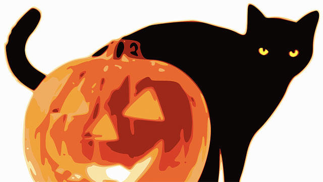 Oftentimes shelters won't let black cats be adopted around Halloween out of a fear that they may be sacrificed