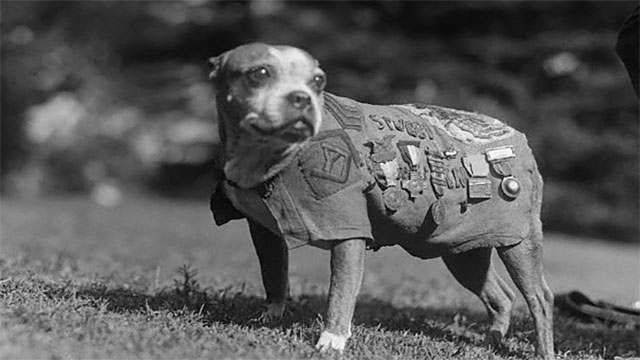 Sergeant Stubby was an American war dog that was promoted during World War II. He became somewhat of a legend, but one of his most famous exploits was holding a German spy captive until Allied forces arrived