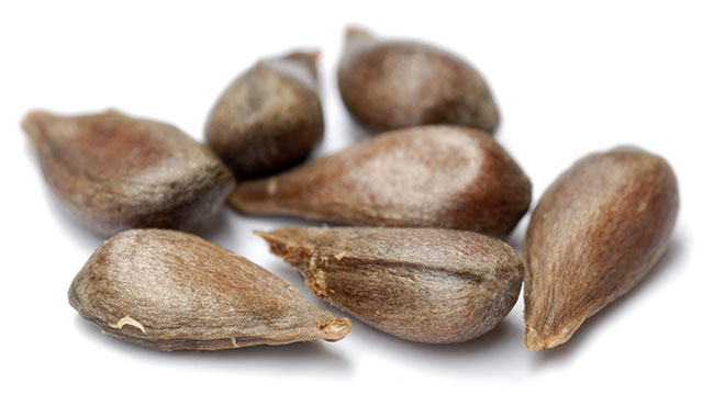 In 1963, a jar containing 2,000 year old seeds was discovered in Israel. They were planted in 2005 and a tree that has been extinct for almost two millennia sprouted! (Judean date palm)