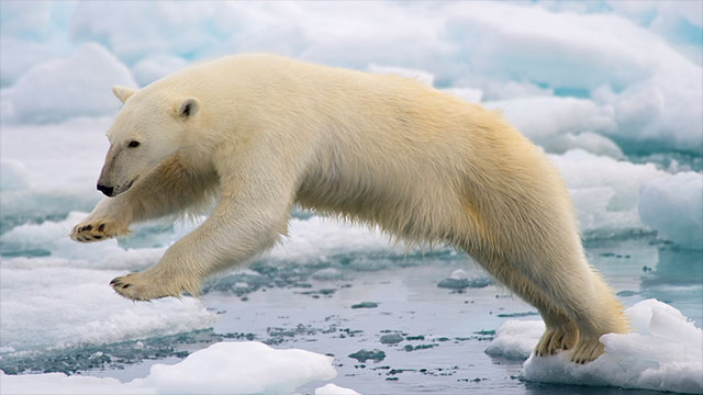 In Churchill, Canada residents leave their cars unlocked so that passing pedestrians can take shelter if they happen across a polar bear