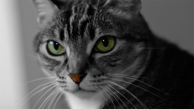 Cats will headbutt people that they trust or that make them feel safe