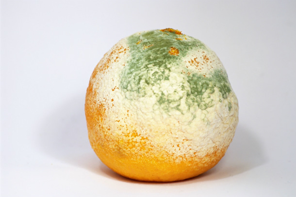 mouldy_clementine