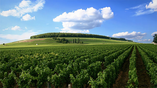 In 1976 there was an event in Paris that blindly compared California wine to French wine. The Californian wine won out