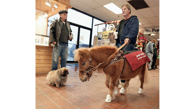 If a blind person is afraid of dogs, or allergic to them, then he or she can be issued a guide horse!