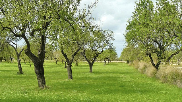 Recent studies have shown how older and bigger trees share nutrients with smaller and younger trees. The new trees then repay the debt when they get bigger.