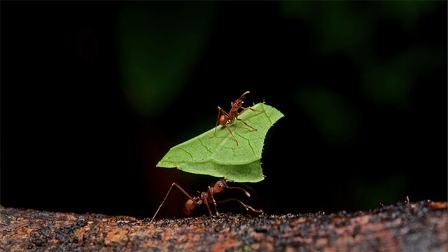 There are 14 species of ants that are known to enslave or use other species of ants