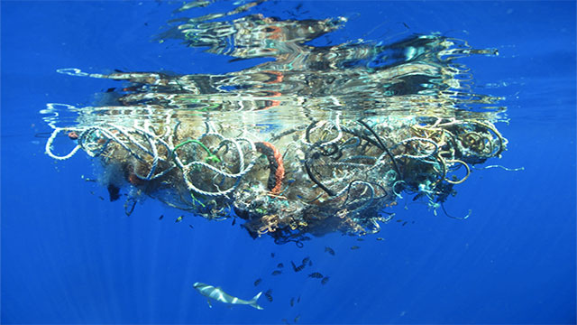 If they are more than 3 miles away from shore, the ships are allowed to dump their sewage into the ocean