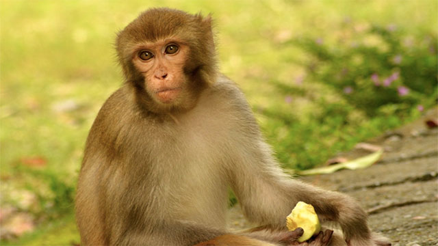 Monkeys have actually had their colorblindness cured when doctors injected cones into their eyes. One day, this could potentially be done in humans as well