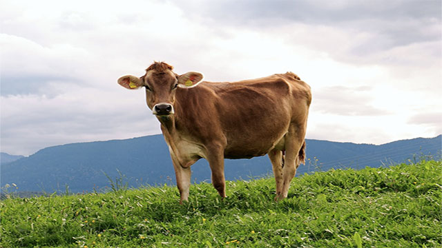 80 percent of the antibiotics used in the United States are for meat production