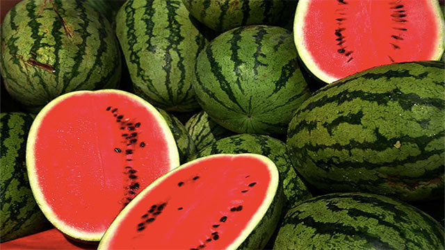 After Walter sent a proposed budget to Congress, Democrat John L. McMillan sent a bunch of watermelons to Walter's office