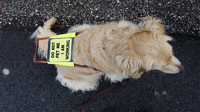 Guide dogs (for blind or visually impaired people) learn to poop on command. This is so that the owner can clean it up