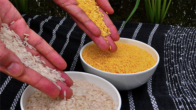 Vitamin A enriched rice (developed in the 90s and called Golden Rice) could have been used to prevent childhood blindness in many countries but was rejected due to concerns over GMO foods (genetically modified)