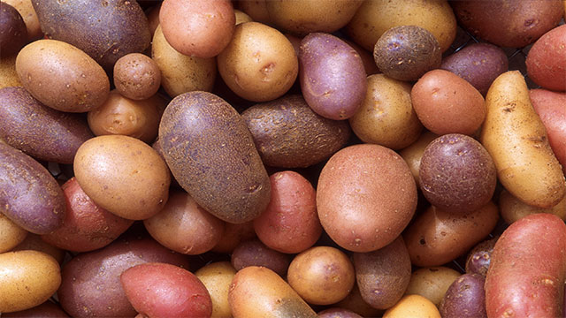 Eating 9 baked potatoes would give a 140 pound adult more than enough of all the essential amino acids and calories that he or she would need for the day