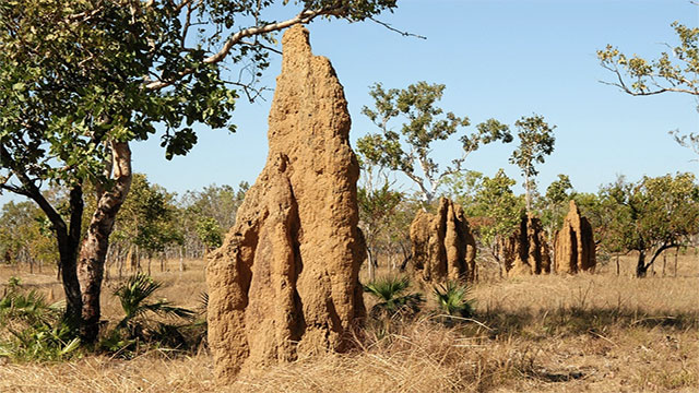 The US Department of Energy is considering using termites as a renewable energy source. They produce nearly 2 liters of hydrogen by simply ingesting a piece of paper which makes them one of the most efficient bioreactors on Earth!
