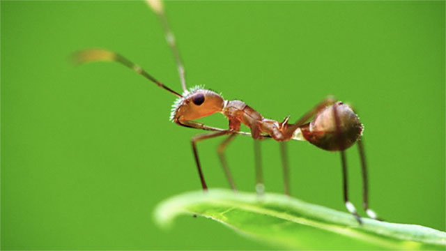 Because they lack significant mass, an ant cannot be injured after falling from a height, even if you throw it out of an airplane