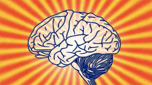 Your left brain controls creativity and your right brain controls logic
