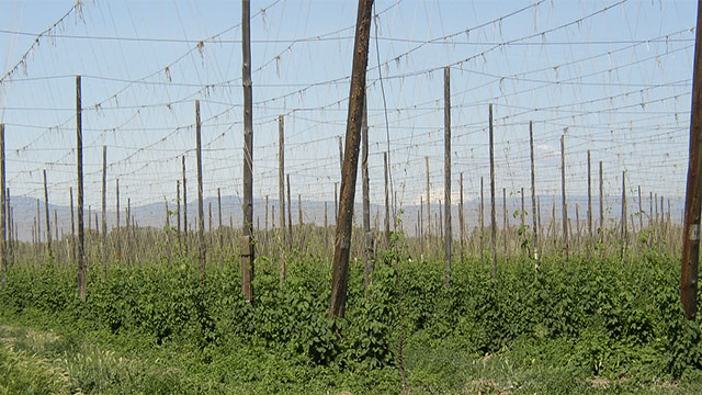 There are historians who believe humans developed agriculture primarily to produce more alcohol
