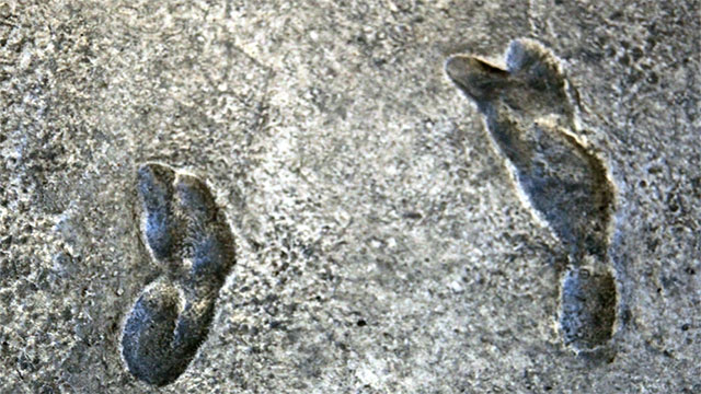 The Laetoli footprints, one of the most significant findings in anthropology, was discovered by scientists while they were having an elephant dung fight