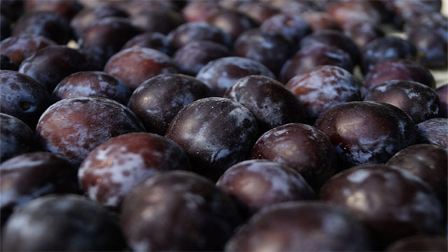 If prunes are dried plums, where does prune juice come from?