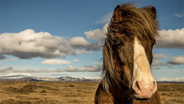 An average horse is capable of nearly 15 horsepower