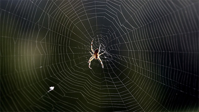 People swallow an average of 4 spiders per year