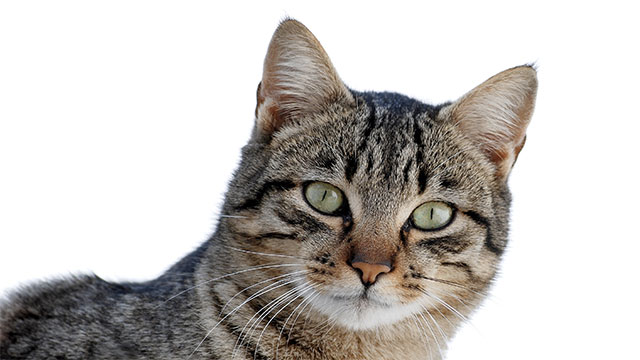 Onions, garlic, and lilies can all kill cause kidney failure and death in your pet cat