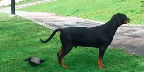 Patient Pup Finally Loses His Cool With The Most Annoying Bird In The Park