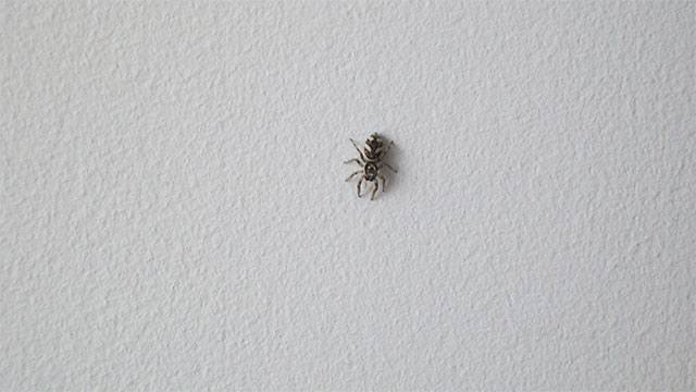 If you are scared of spiders then you are more likely to find a spider in your room. This is simply due to the fact that someone who isn't afraid of spiders might never notice that there was even a spider near them.