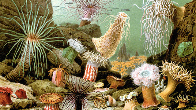 Sea anemones are not actually plants. They are animals that eat small fish