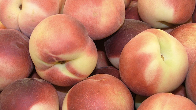 You can be the ripest and juiciest peach in the room but there will always be someone who hates peaches