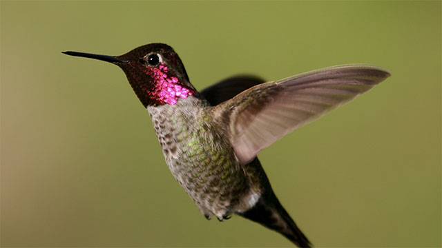 Hummingbirds actually use the silk of spiderwebs to make their nests