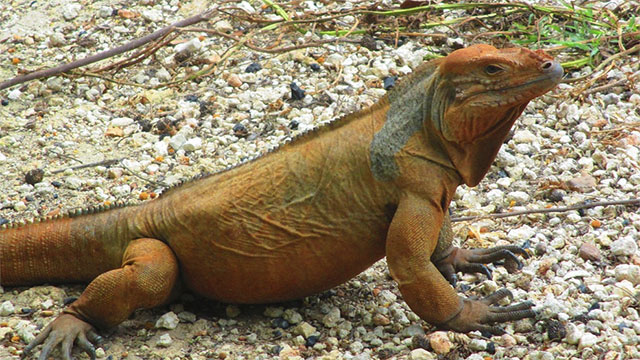 Some lizards have been known to shoot blood out of their eyes to ward off potential predators