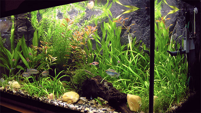 Plants and fish