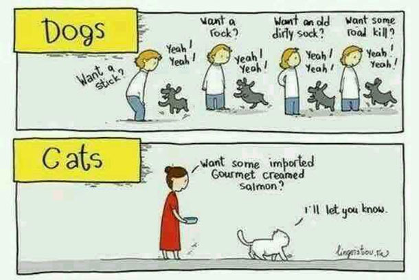 Dogscats