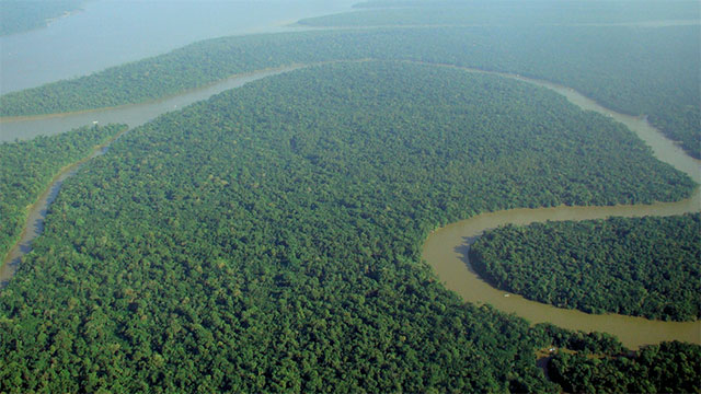 There is a species of fungus in the Amazon that can feed on plastics