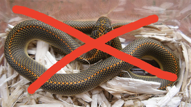 Ireland is one of a few countries in the world that doesn't have any snakes.