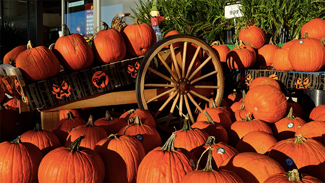 Halloween comes from an ancient Irish festival known as Samhain