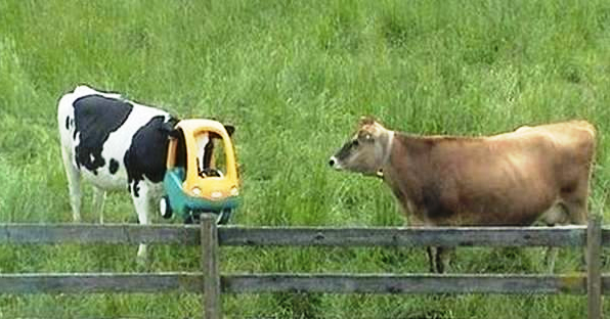 animals stuck in funny places