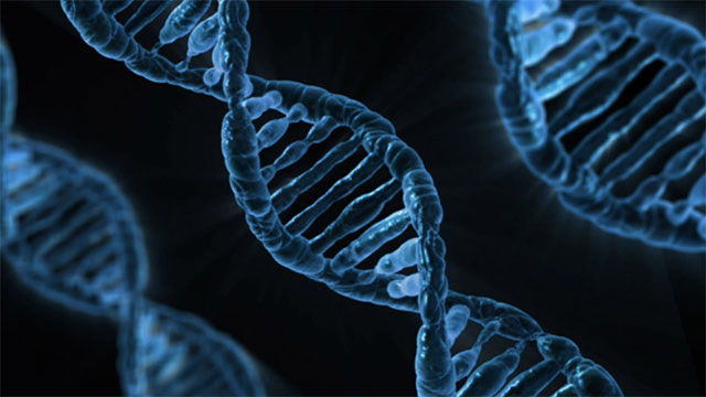 We still don't know the function of more than 80% of our DNA