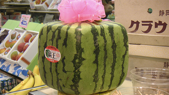 Some Japanese farmers grow square watermelons for easier storage